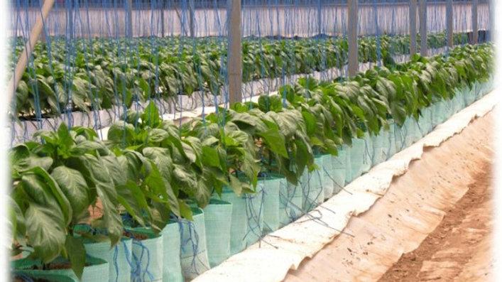 Grow Bag Long 20 L