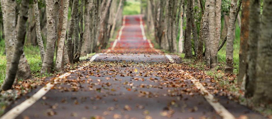 Caminho ao longo da vida