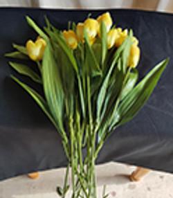 Tulippes