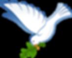 white-dove-hi.png