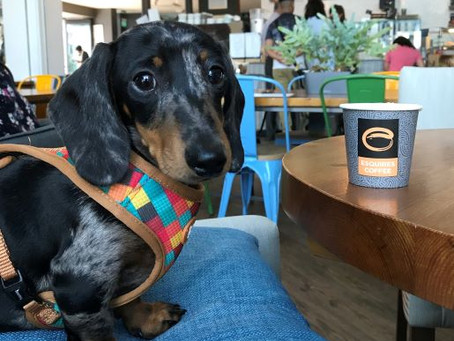 The First Dachshund Meet Up In Coventry!