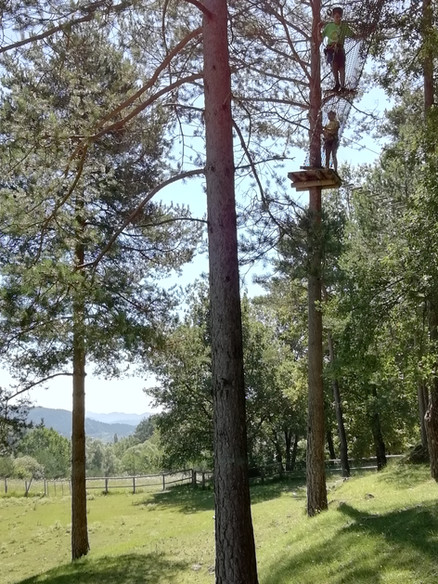 Forest and Pasture Estiula Aventura
