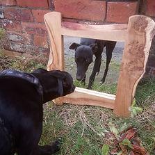 Mark Talbot carpentry's dog, Tom.