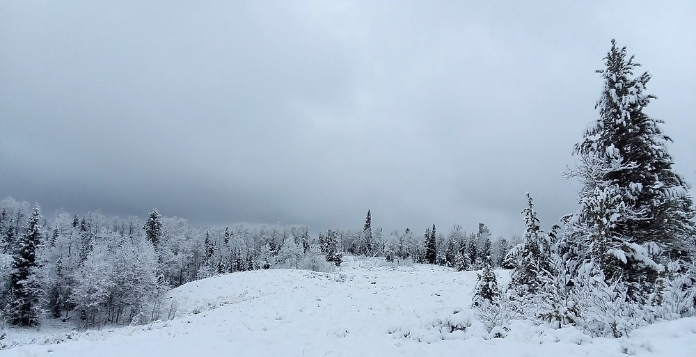 Snowy trees near small remote town of Dubois, Wyoming