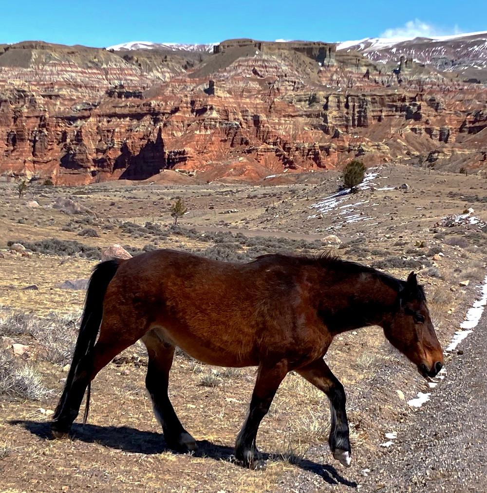Open range horse near badlands in Dubois, Wyoming