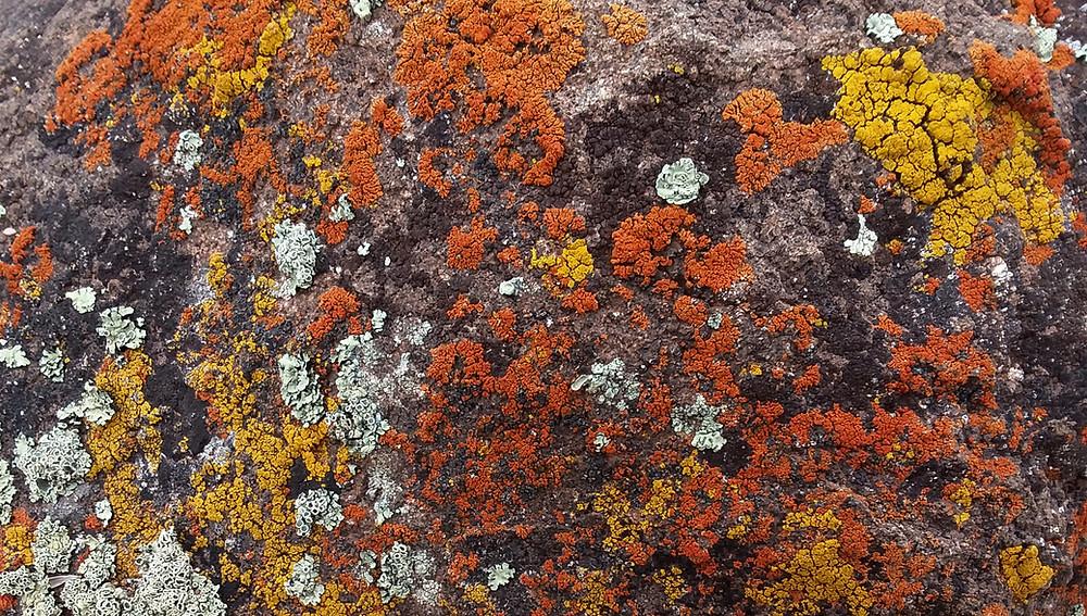 Lichen-covered rock near Dubois, Wyoming