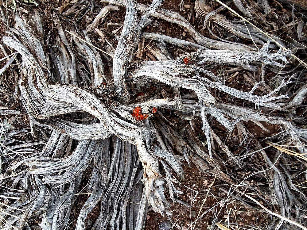 Dead plant near Dubois, Wyoming