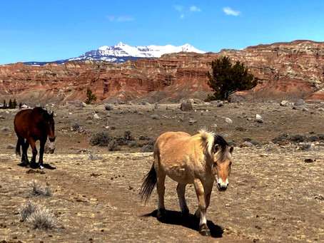 Horses of the Badlands