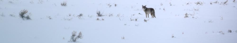 Wildlife near Jackson, Wyoming