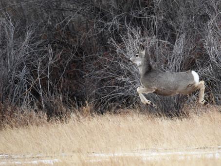 Backyard Wildlife Sightings