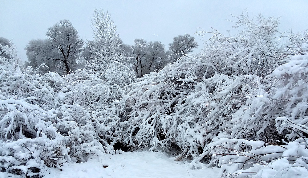 Frosted branches in small remote town of Dubois, Wyoming