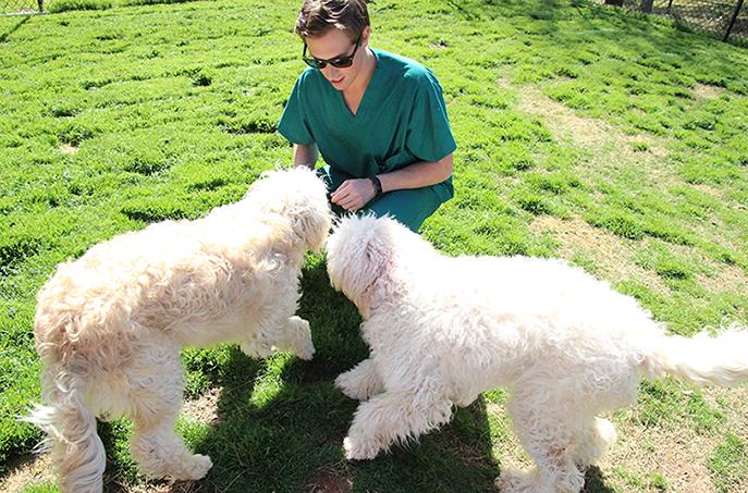 auburn veterinary clinic