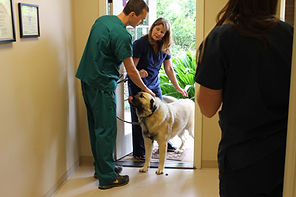 Boarding at Moores Mill Animl Hospital