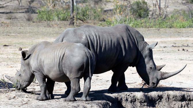 Wildlife Conservation Links & News