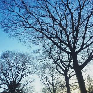 Fascinatie🍂 #december #loveit #silhouet