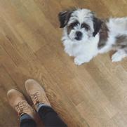 Altijd fijn thuis komen! ✨🐶 #blijehond