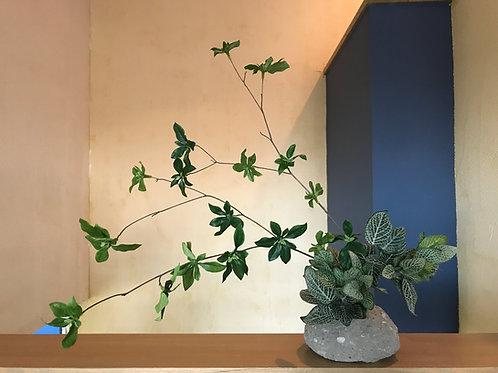インテリアグリーンA 石の花器付き