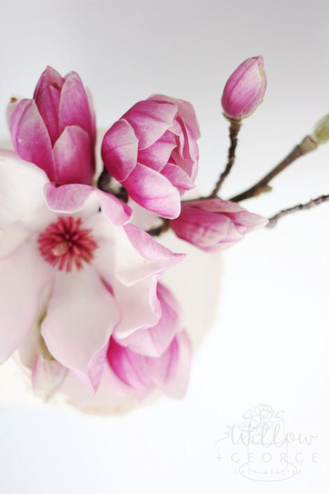 magnolia pink