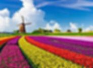 pakej eropah tulip.jpg