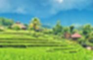 pakej bali murah- Ubud Village.png
