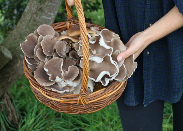 Basket of Mushrooms.png