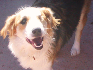 new article re ease of living with blind dogs