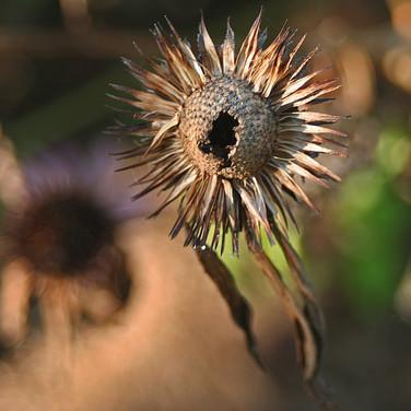 flower dead.jpg