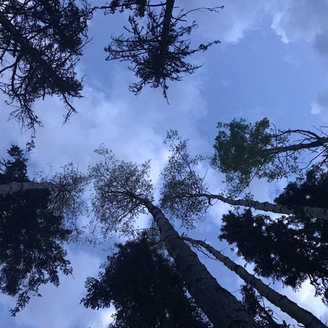 Lookin Up