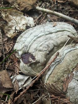 Leaf Stamped Mushroom