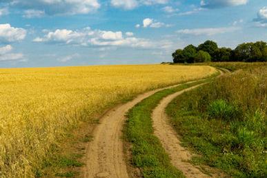 wheat-fields.jpg