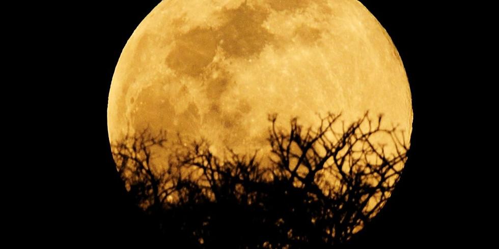 Full Moon Night Walk