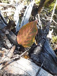 Leafbeauty2.jpg