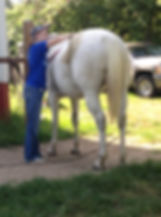 volunter grooming a lesson horse.