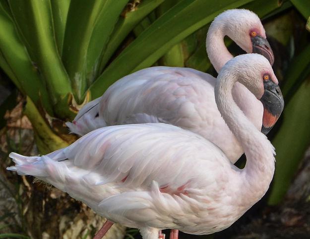 duo-flamingo.jpg