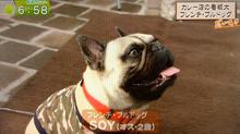 当店看板犬「Soy(ソイ)」関西テレビ「報道ランナー」に登場