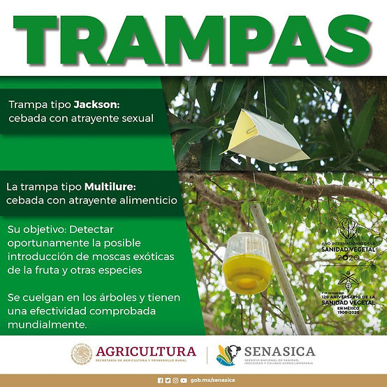 Trampa Multilure/fuente: Senacica/Agricultura
