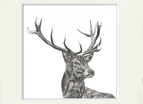 Exmoor Stag