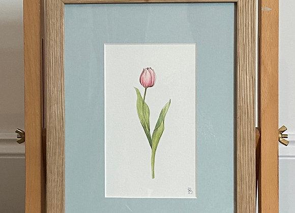 Original Tulip Watercolour