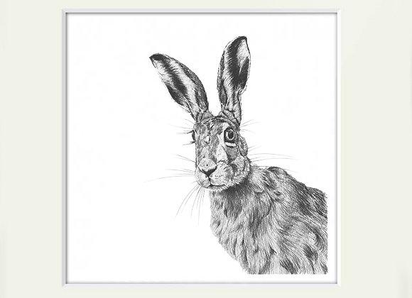 Peeping Hare