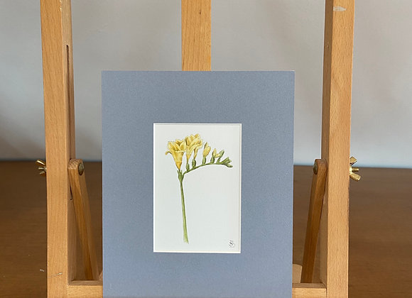 Original Freesia Watercolour