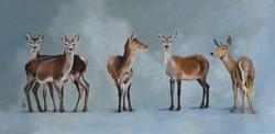 Five Fallow Deer