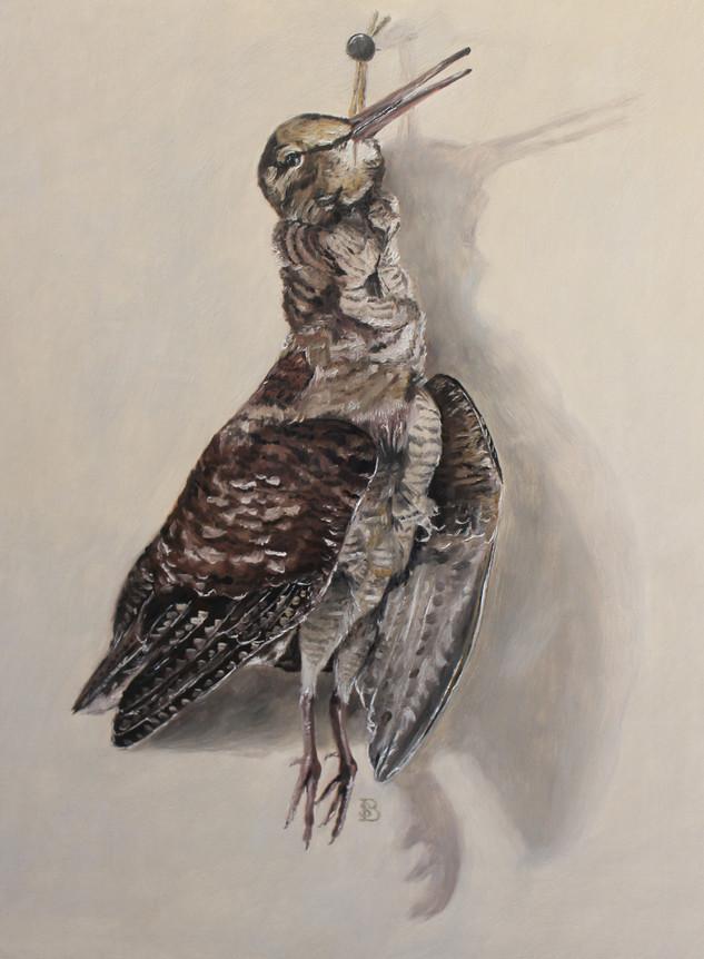 Hanging Woodcock