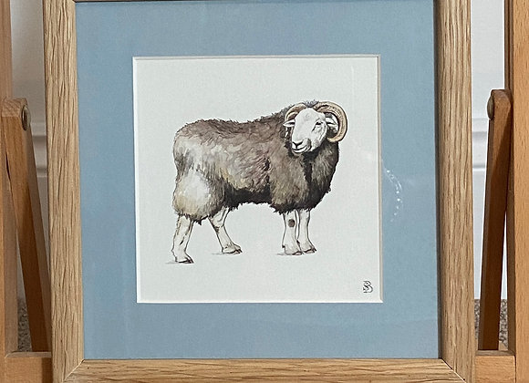 Original Herdwick Sheep Framed Watercolour