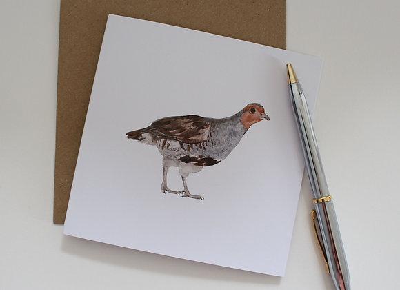 English Partridge Greetings Card