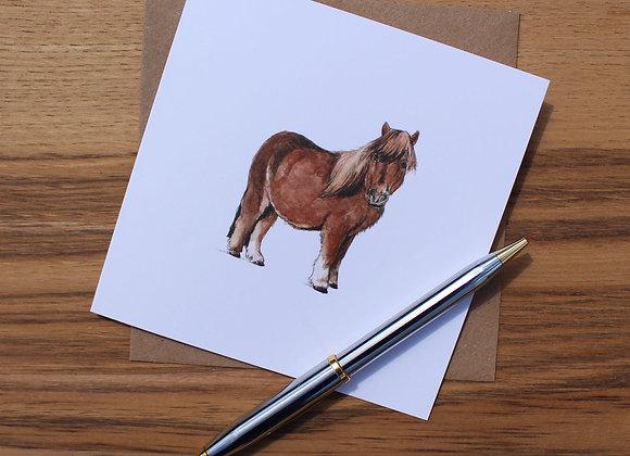 Shetland Pony Greetings Card