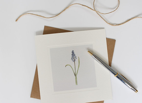 Grape Hyacinth Greetings Card (Trade)