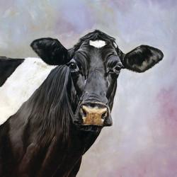 Friesian Cow