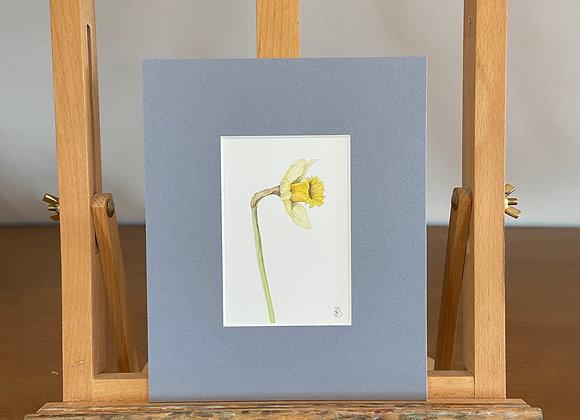 Original Daffodil Watercolour