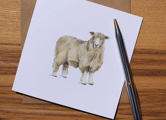 Cotswold Sheep Greetings Card (Trade)