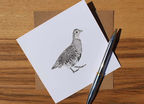 English Partridge Drawing Greetings Card (Trade)